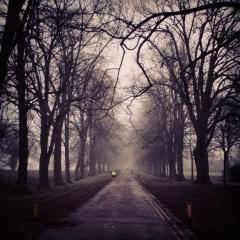 misty park insta